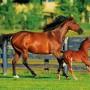 35-7843 Puslespill hestefamilie, 500 biter, 2