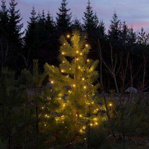 LED-juletrelys - 100 stk. Smarte lys, 5 ledninger med LED lys festet i en ring. Innendørs og utendørs.
