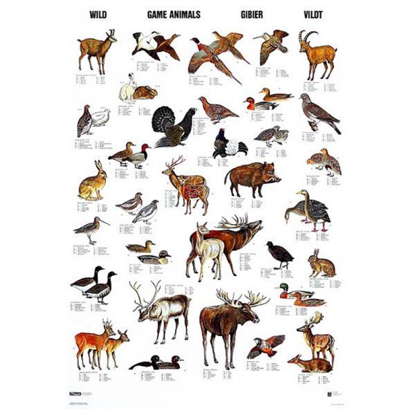 Plansje med vilt 70 x 100cm. Flott plakat som inneholder 32 av de vanliste artene i Europa og Nord Amerika. Navn på hele 11 ulike språk, inkl. norsk og latin.