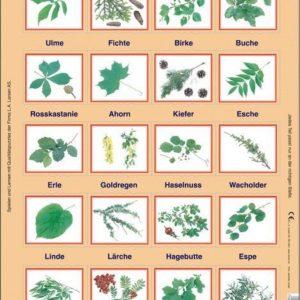 Puslespill Trær og busker