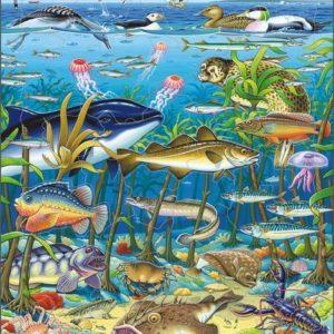 Puslespill Fisk i Nordsjøen
