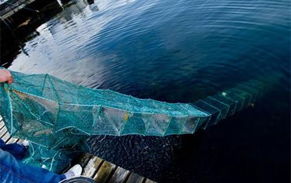 Ruse på 10 meter med 27 agnposer. Fiske, fiskeredskap, garn, hav, fiskeruse.